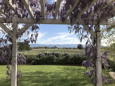 The patio view when the wisteria is in full bloom.