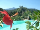 La piscine est entourée de romarin , d hibiscus 🌺 , de bougainvilliers ...