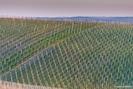 magnifique vue sur les vignes