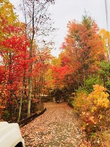 Driveway in Fall