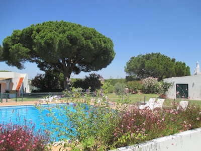View from pool towards umbrella pine by Villa 2