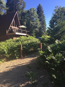 In the Summer, the property is in full bloom in the fern meadow.