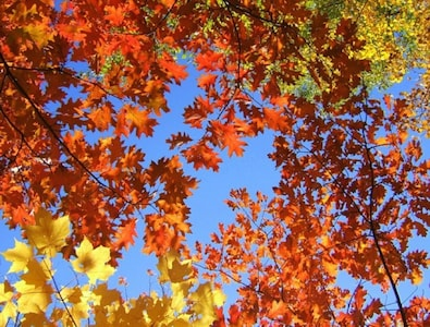 Fall Foliage - ADKs Peak Late Sept.-3rd Wk. Oct. - Altitude & Latitude Dependent