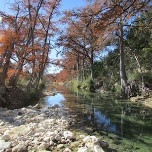Changing of the Cypress Tree Leaves in Fall!