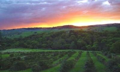 Coorabell, Nouvelle-Galles-du-Sud, Australie