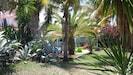 jardin arboré et fleuri, agaves, palmiers, cactus, bougainvillées..