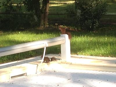 Nos amis écureuils bienvenus à Cameyrac