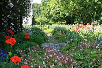 Main garden - mid June