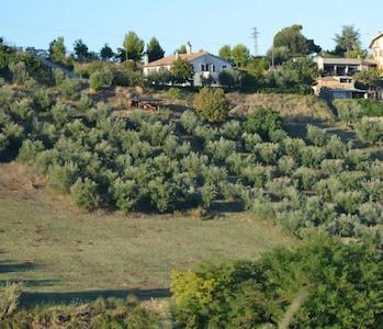 Appartamento per rilassanti vacanze tra gli uliveti affacciati sull'Adriatico