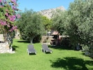 Large Lawned Garden with Olive trees for shade