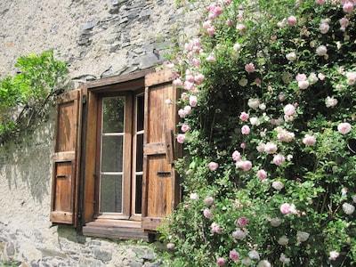 rosiers devant la fenêtre du sejour