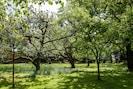 Der Obstgarten vor dem Ferienhaus