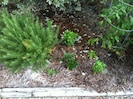 Herb garden for guests.  Rosemary, basil, parsley, oregano, thyme and mint