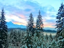 Winter view, mountains, sunset, big trees.
