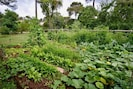 Jardin / Vegetable garden