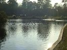 The nearby lake with ducks