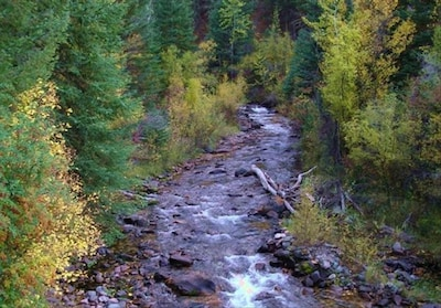 Emigrant Creek, flows by the cottage