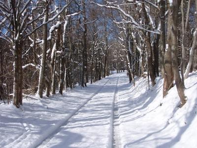Short walk from cabin