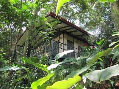 Casa Selva in its jungle setting.