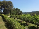 citrus fruit trees and views of surrounding hills