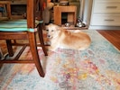 Sally enjoying the beautiful new rugs