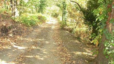chemin d accès en automne