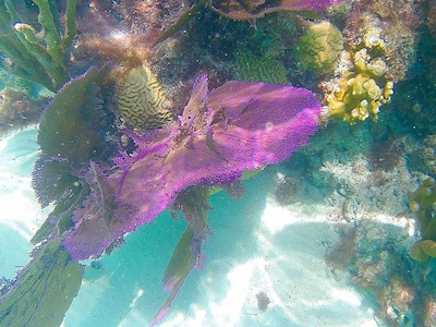 Snorkeling 50 feet from the property (photo Aug 2, 2019)