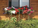 Beautiful window boxes!