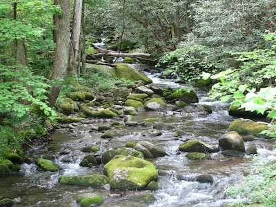 Dunn's Creek as it exits the National Park just before your cabin's view!