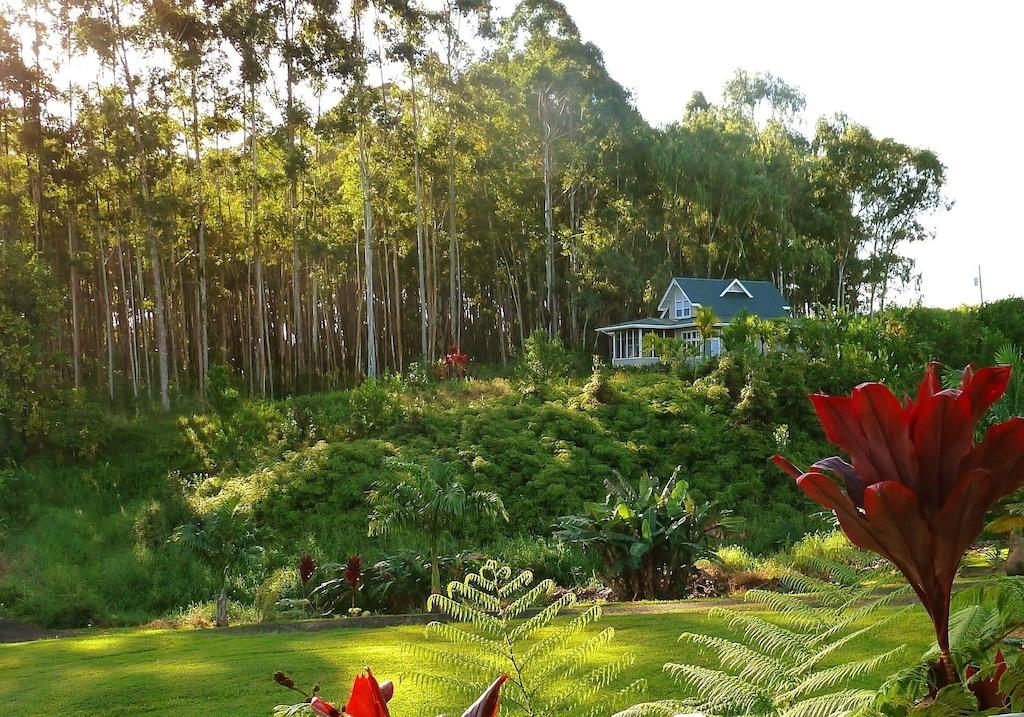 House tucked away behind lush vegetation