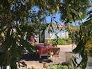 Les mimosas, la terrasse, l'ombre des chênes et la façade.