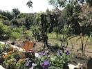Le jardin flamboyant !