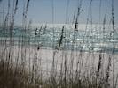 Sea Oats/Beach
