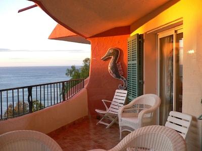 La terrasse: table,4 grands fauteuils, 3 transats.