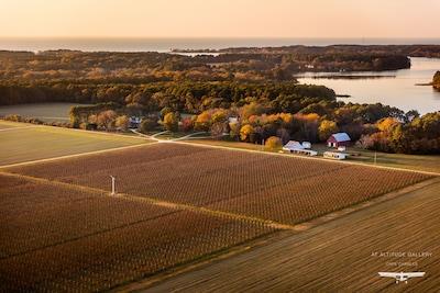 Chatham Farm and Vineyards on Church Creek, Virginia's Eastern Shore