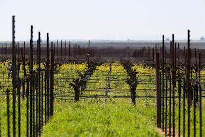 Vineyard Planting in Progress, ETA 5/2019