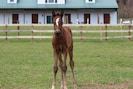 Our new filly! Born 3/10/19
