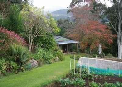 Kaimai Mamaku Forest Park, Coromandel Forest Park, Waikato, New Zealand