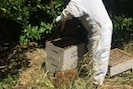 Beehive management
