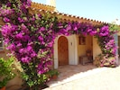 Main entry surrounded by Bougainvillea