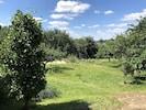 Blick in den Garten, dahinter der Plessower See.