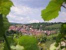 Le village de F67560 Rosenwiller niché entre les vignes, les vergers et la forêt