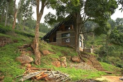 Award-winning eco friendly construction Hornbill House