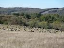 troupeau  sur le plateau du guilhaumard