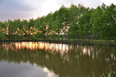 A view of the pond lined with willow trees, at sunset.