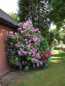 Rostrup, Bad Zwischenahn, Lower Saxony, Germany