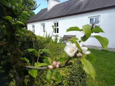Year round beautiful gardens