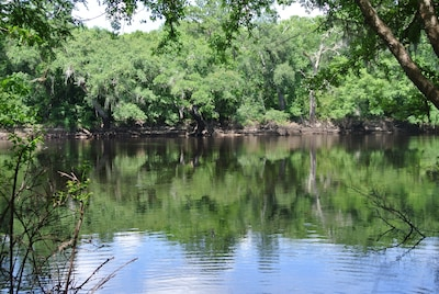 View of the Suwannee from the bank.