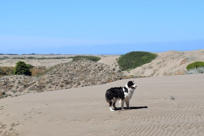 Dog-friendly dunes part of property.