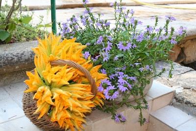 fleurs de courgettes !